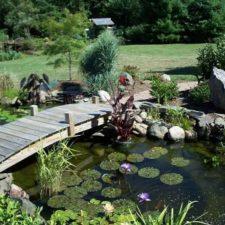 Beautiful Pond